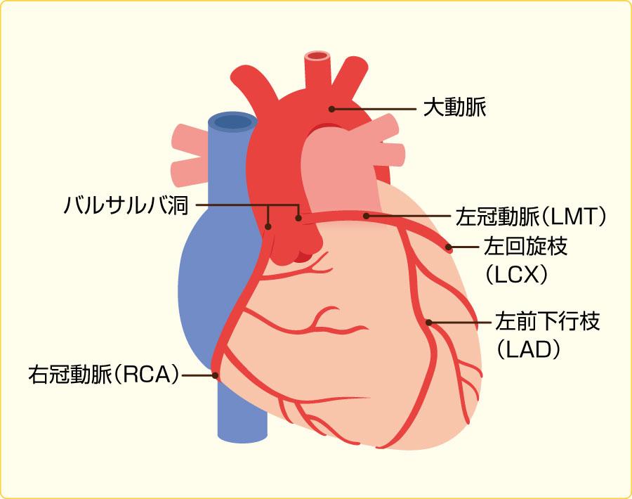 心臓 - 国立循環器病研究センター